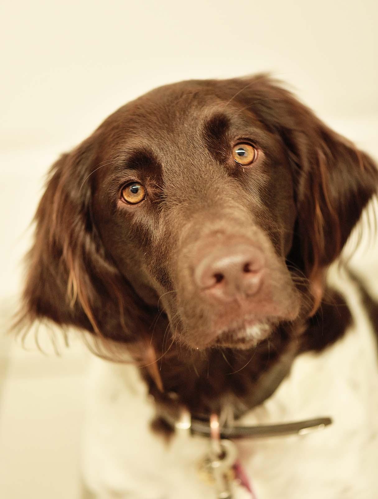 Arzt für Hunde - Tierklinik Mitterndorf