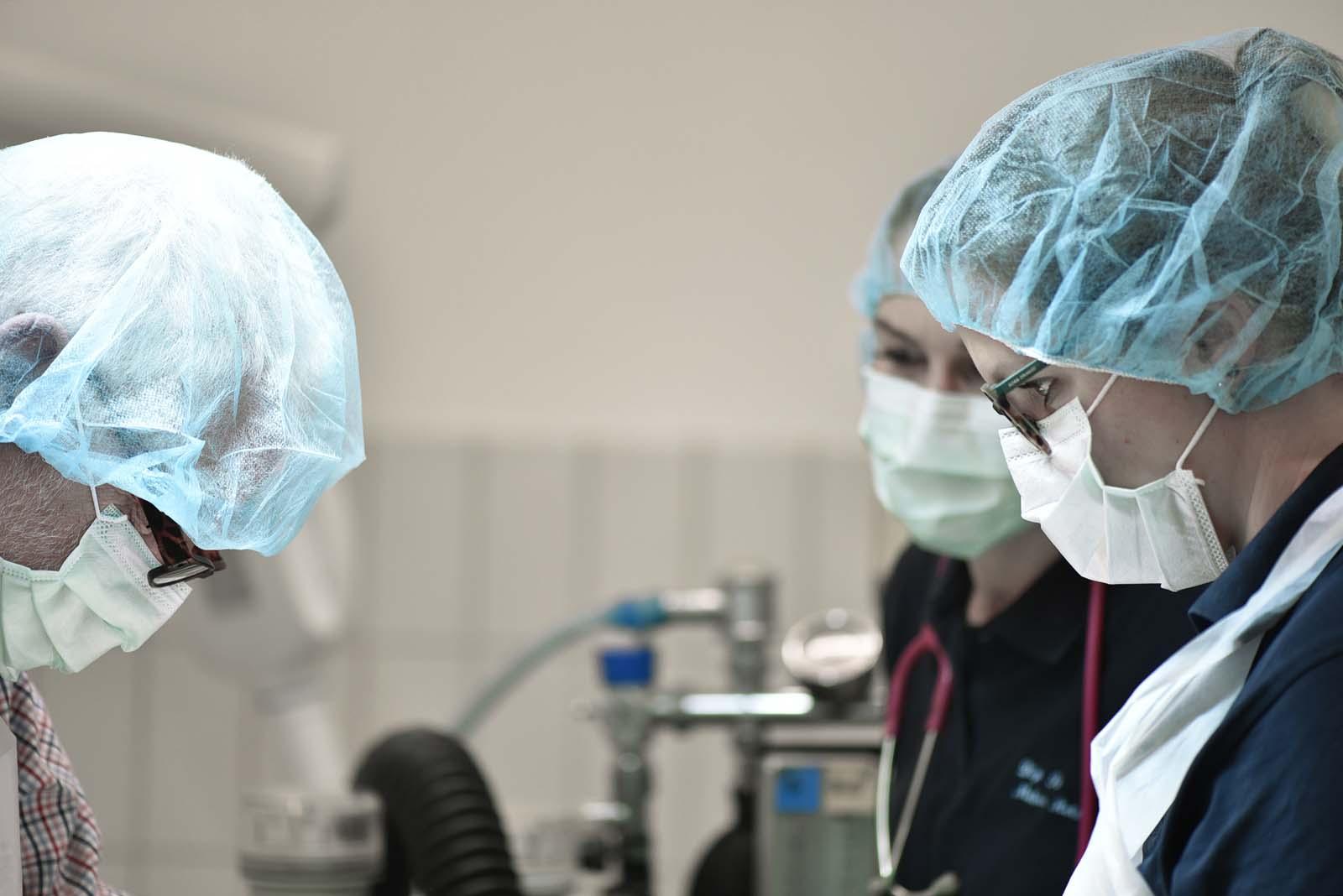 Chirugie bei Tieren - Tierklinik Mitterndorf
