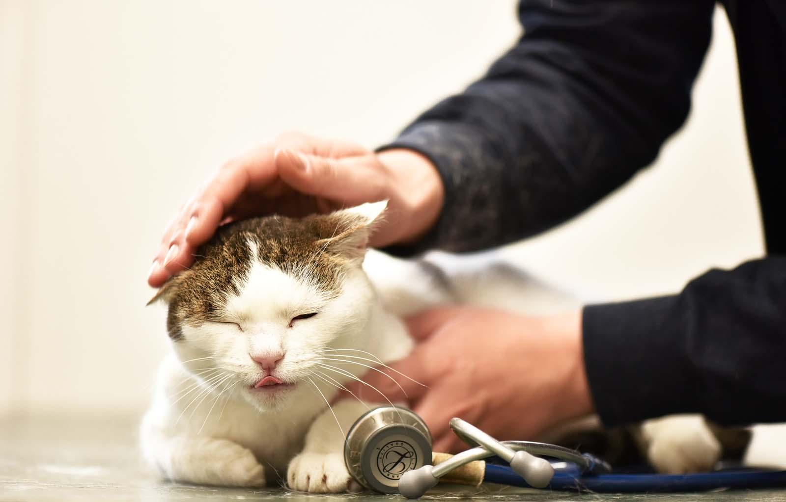 Katzen Tierarzt - Tierklinik Mitterndorf