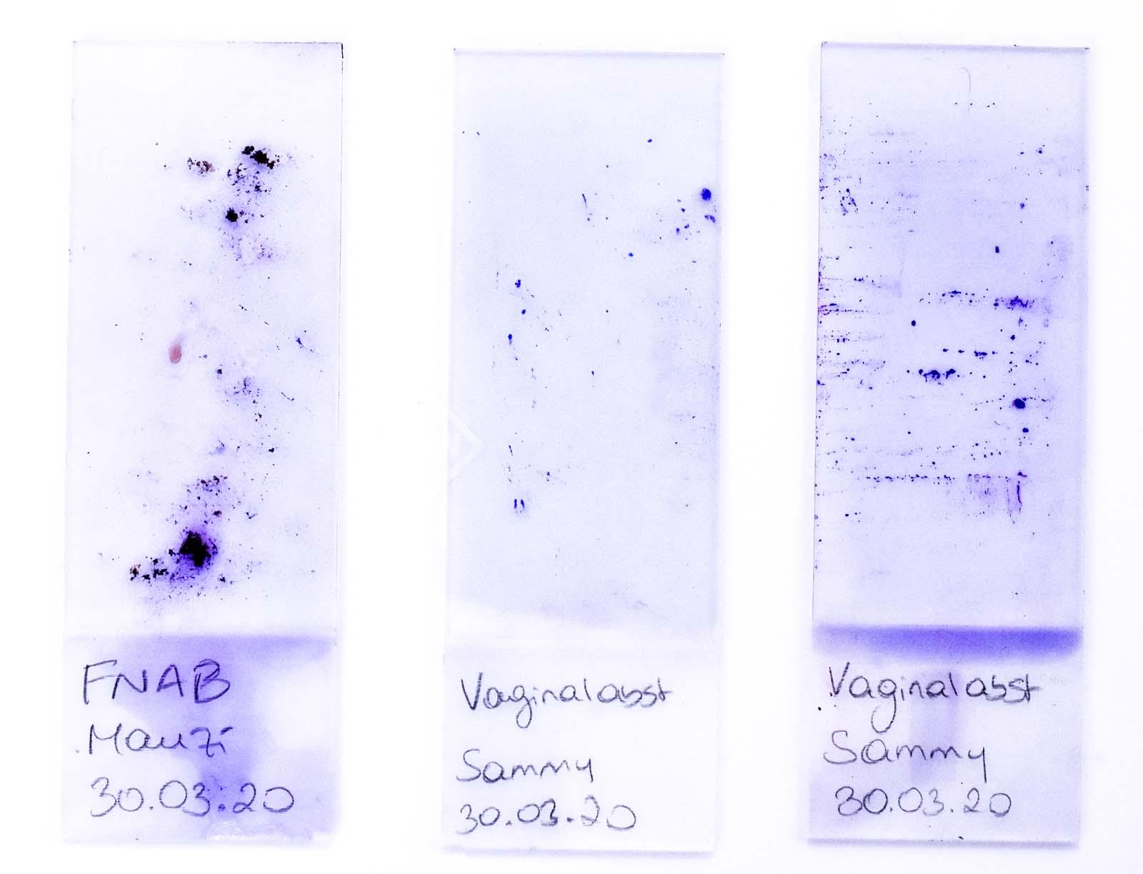 Mikroskopische Untersuchung - Tierklinik Mitterndorf