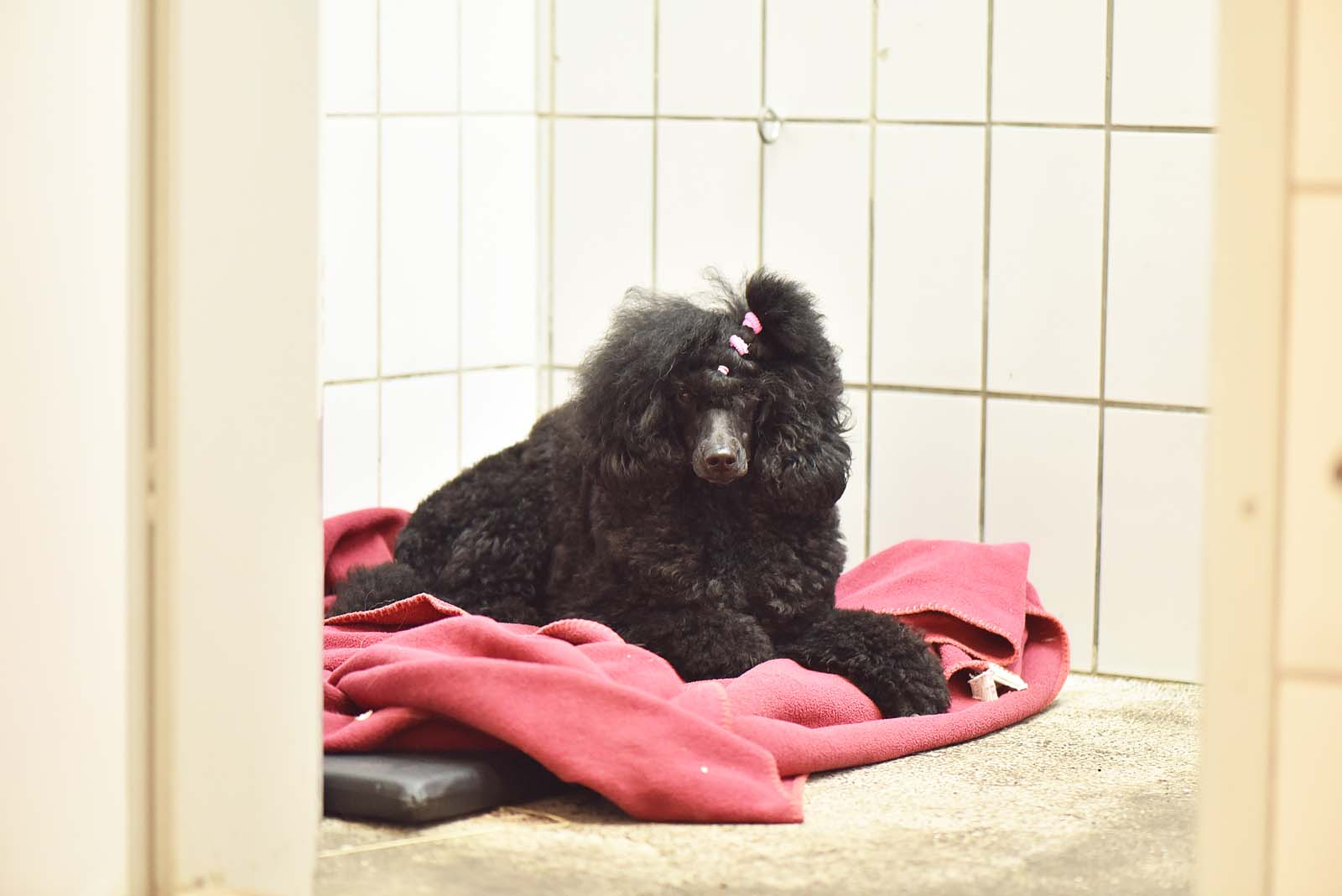Stationäre Aufnahme Hunde - Tierklinik Mitterndorf