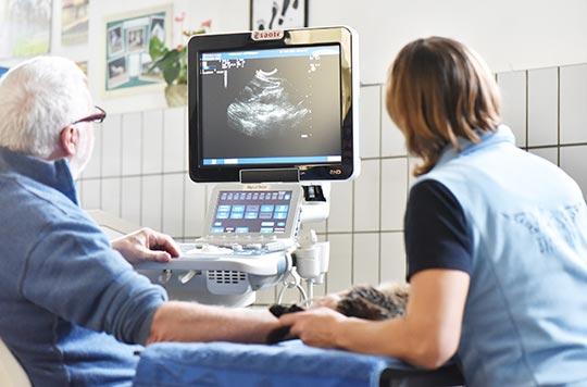 Tierarzt-Diagnostik---Tierklinik-Mitterndorf