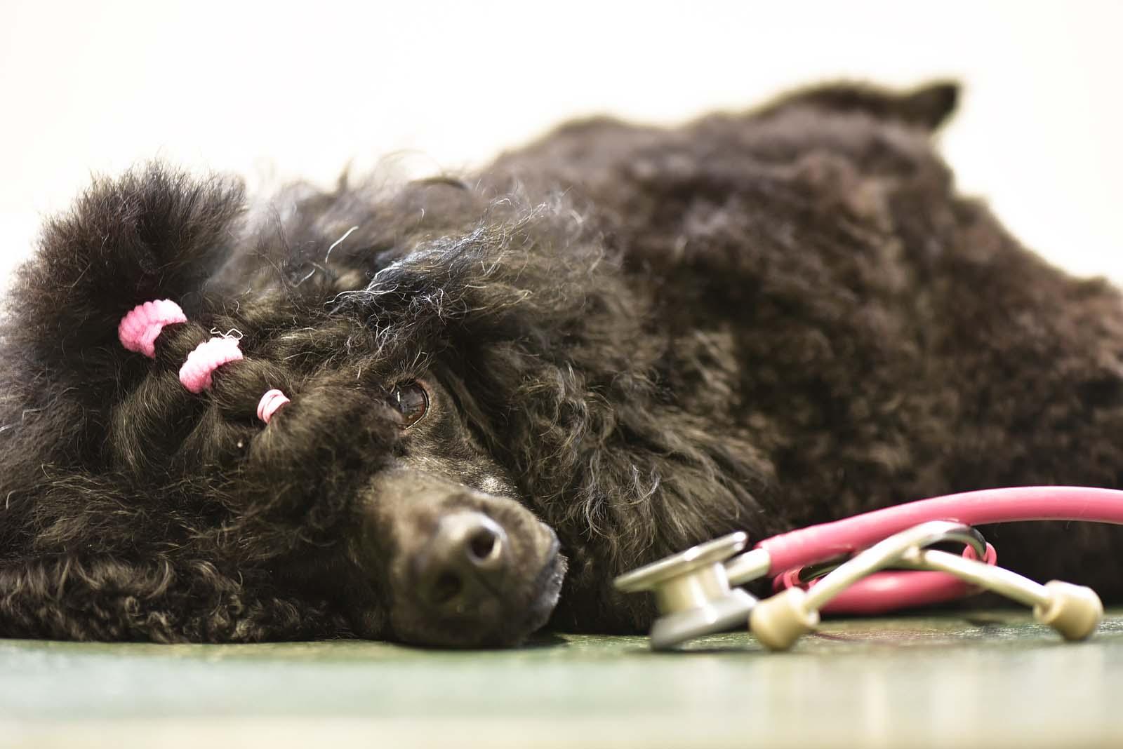 Tierarzt Hunde - Tierklinik Mitterndorf