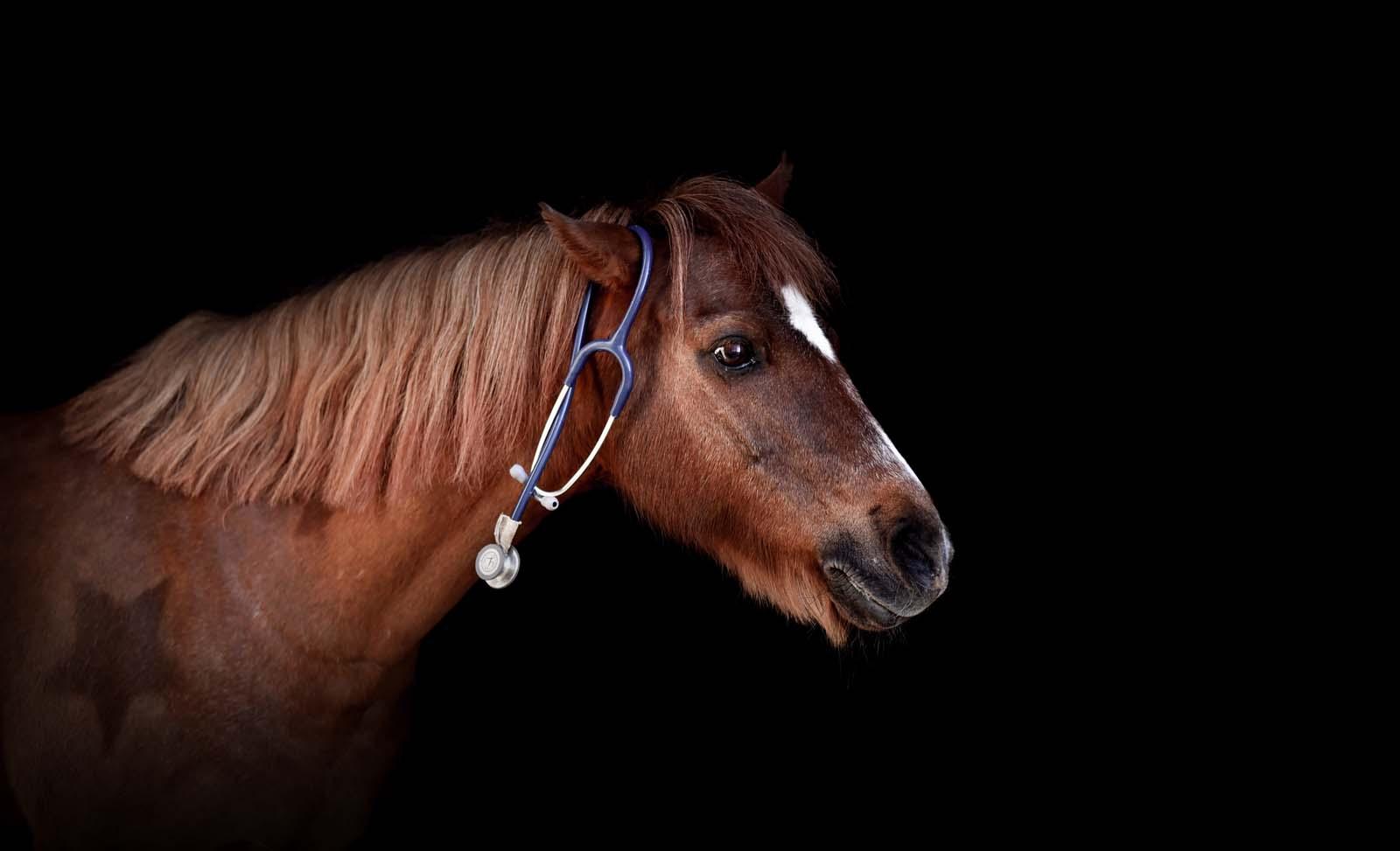 Tierarzt Pferde - Tierklinik Mitterndorf