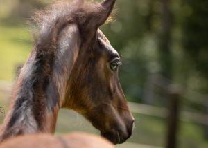 Gyn Pferd - Tierklinik Mitterndorf