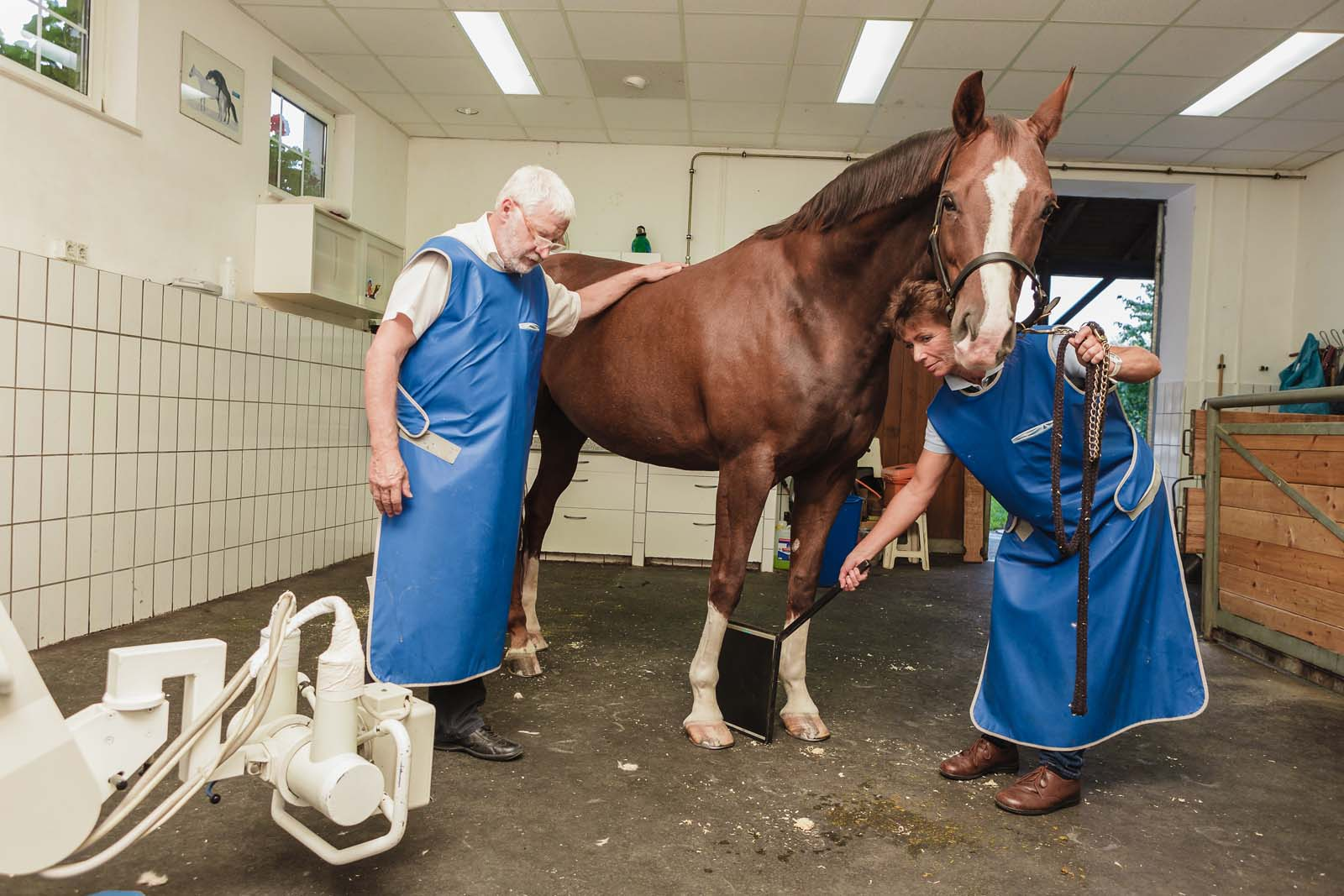 Orthopädie Pferd - Tierklinik Mitterndorf