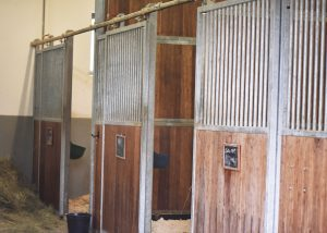 Stationäre Aufnahme Pferd - Tierklinik Mitterndorf